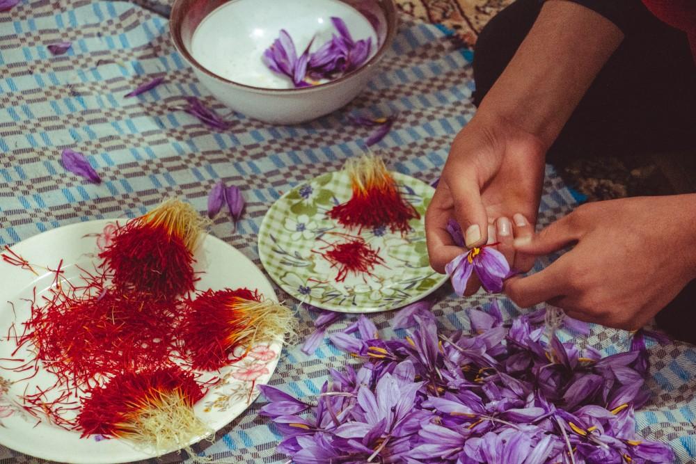 Vytrhat z kilogramu květů krokusu čnělky šafránu trvá čtyři až pět hodin. Získáme tak 12 gramů šafránu.
